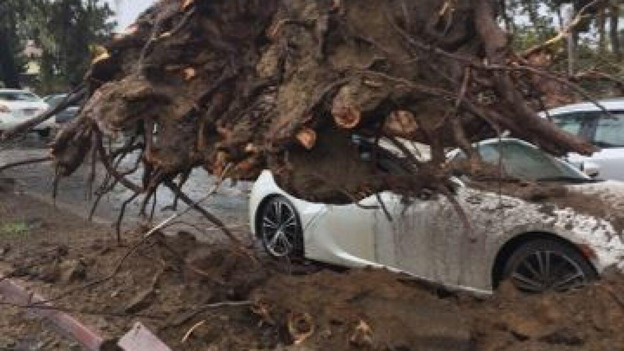 Fierce storm brings down trees across county