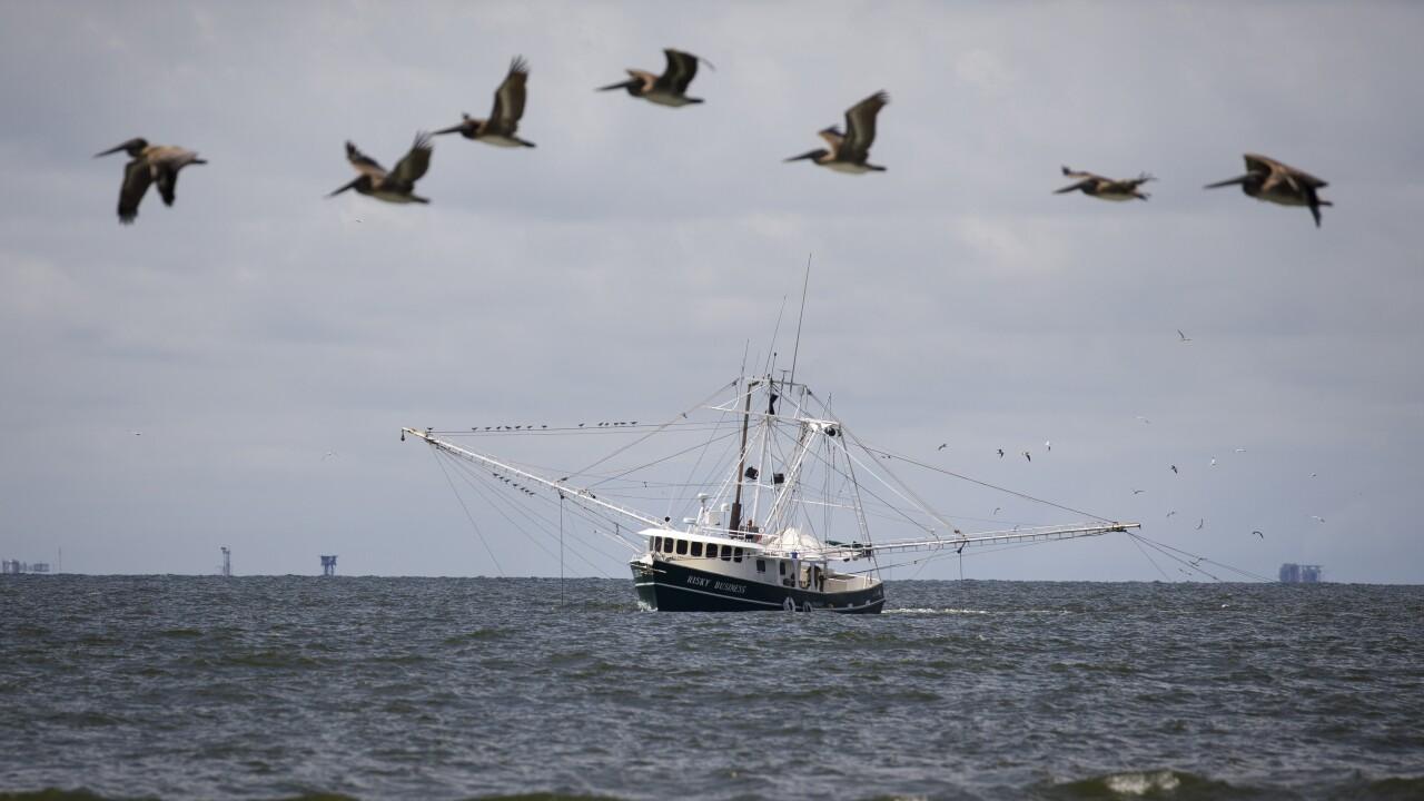 Combination Of Rising Sea Levels And Subsiding Land Endanger Louisiana Coast
