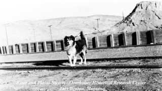 Shep, Montana's Faithful Dog