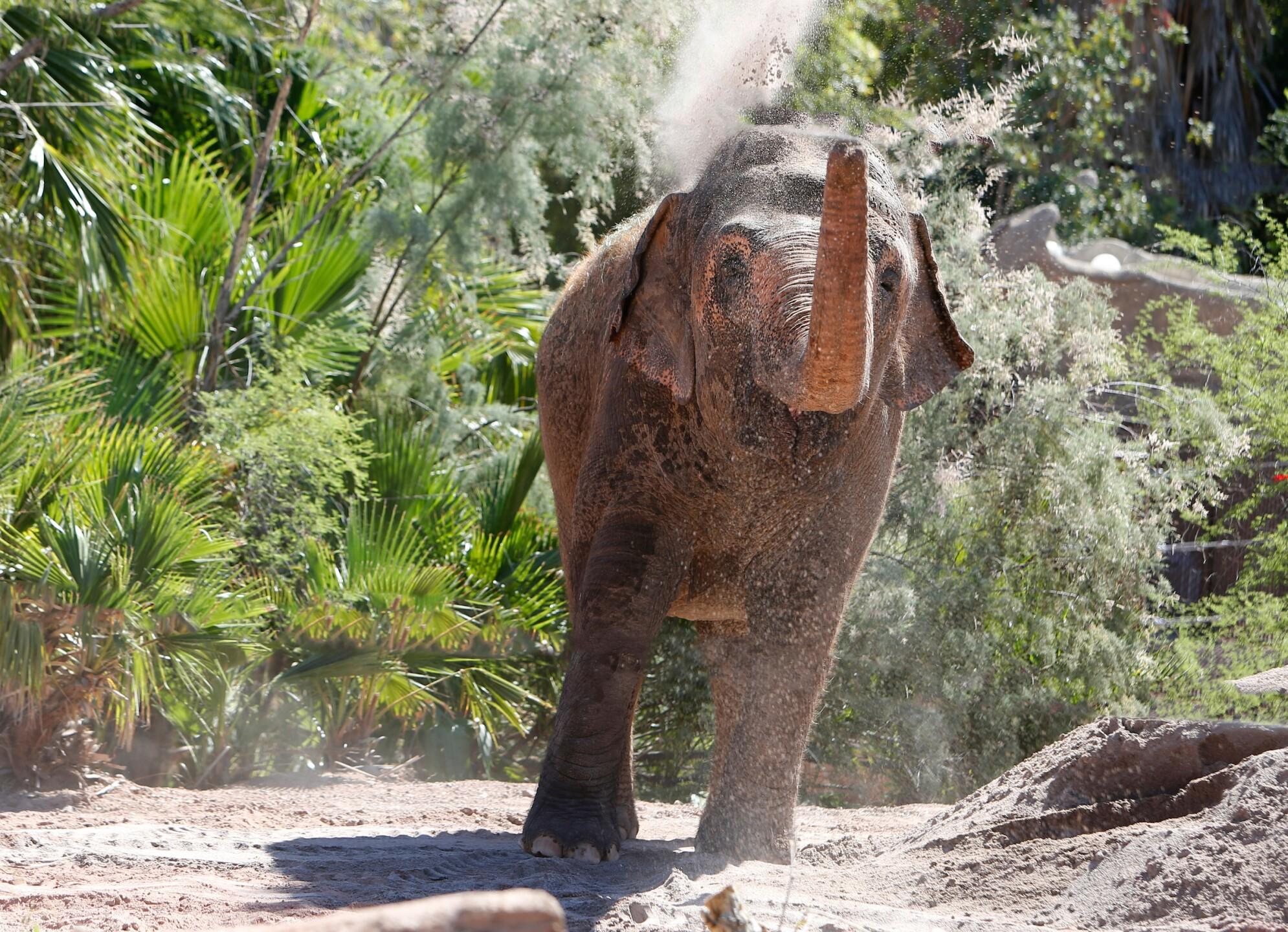 Reba Asian Elephant Phoenix Zoo - Handouts13.jpg