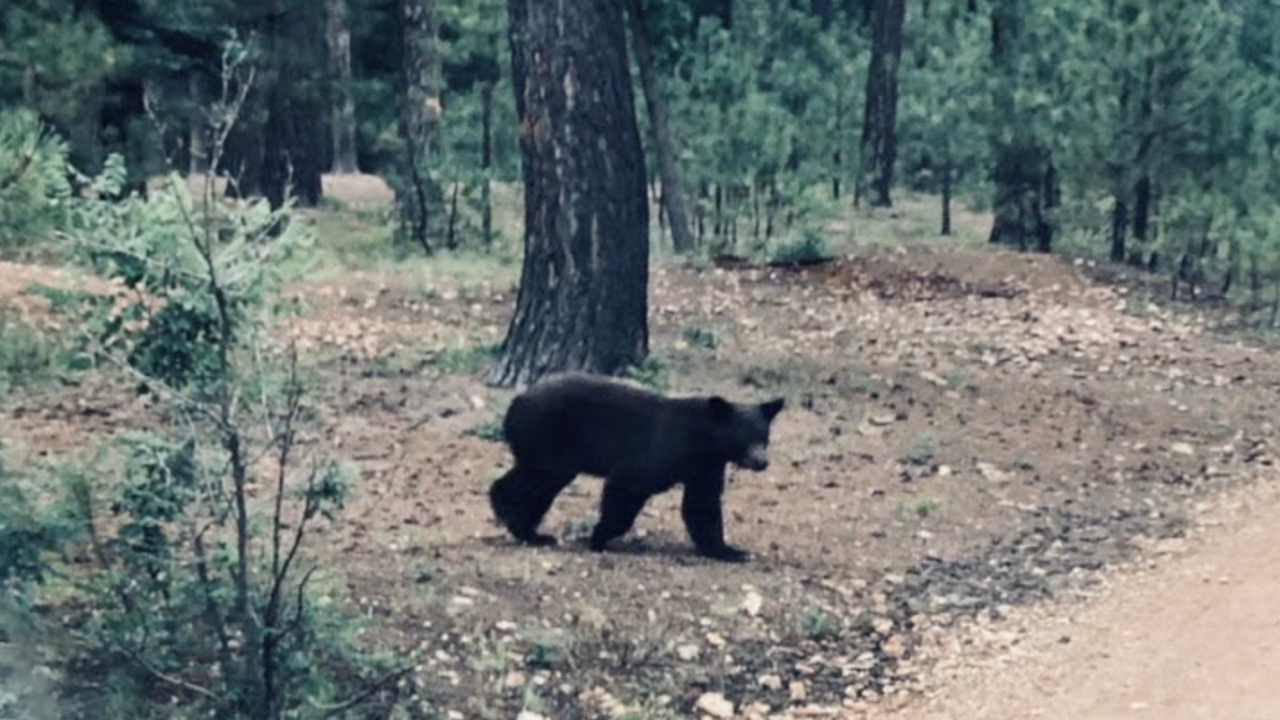 Bear targets Valley family
