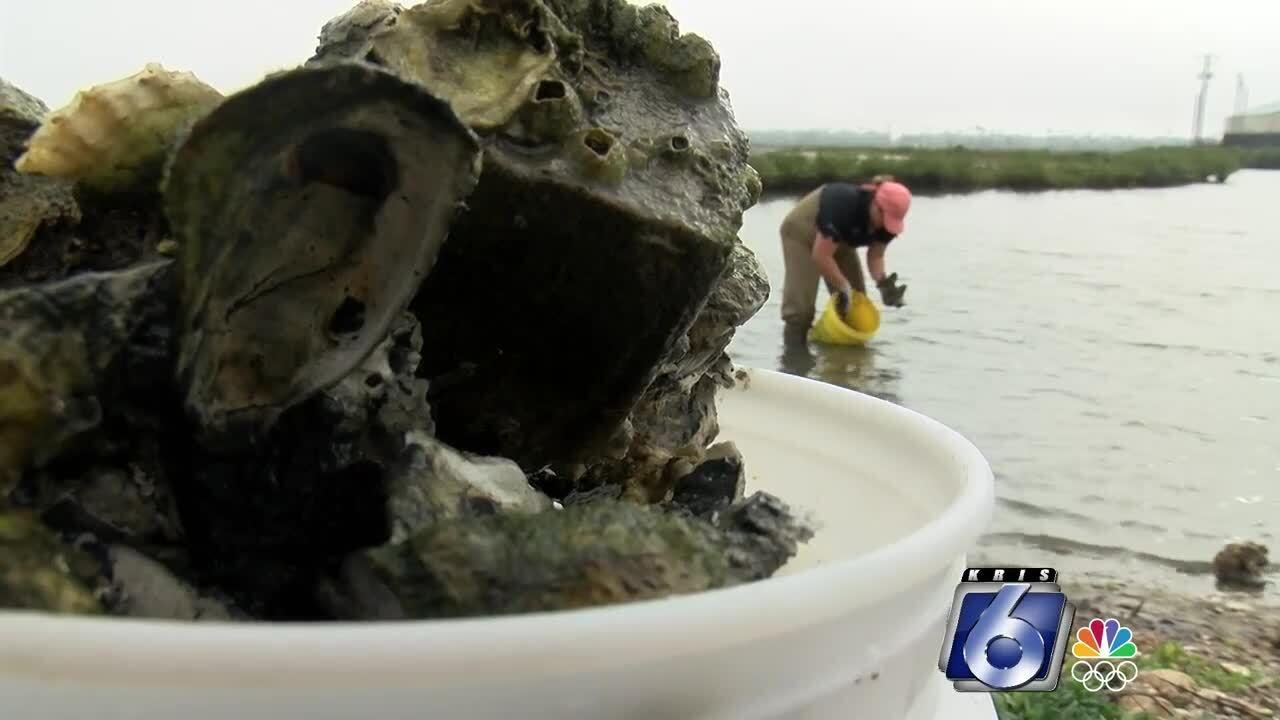 Oysters 122.jpg