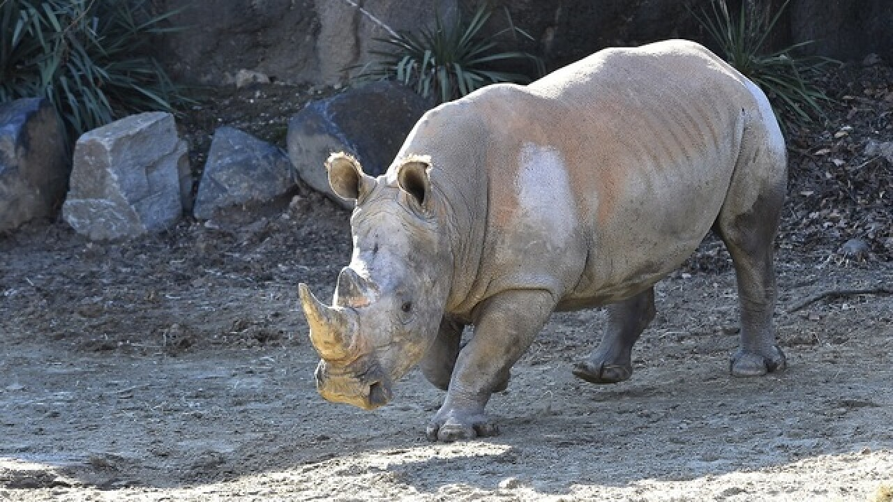 Maryland Zoo welcomes new Southern white rhino