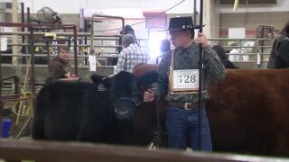 Montana Ag Network: NILE Heifer Program deadline is approaching