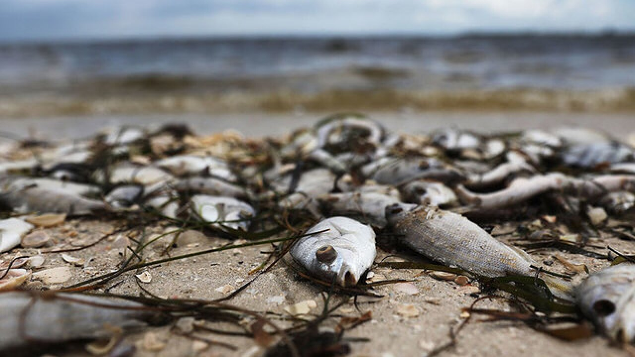 What's fueling the red tide?