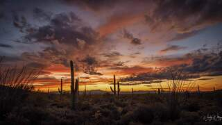 Wendy Witzig JAN 10 Sunset Saguaro National Park.jpg