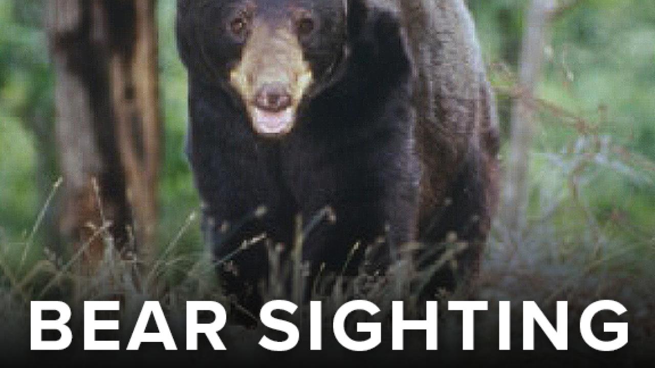 BEAR SIGHTING D.png