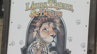 lions tigers bears alpine_2.png