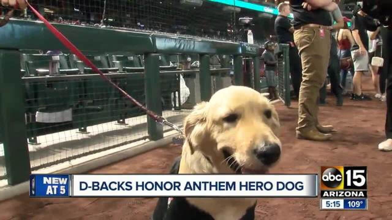 Dog who saved owner from rattlesnake bite in Anthem honored