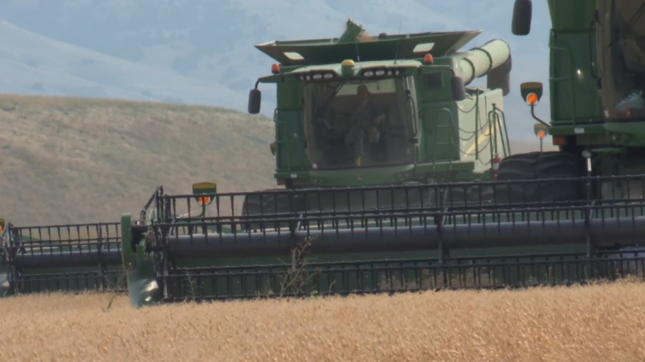 Montana Ag Network: Pulse growers urged to sign-up for Coronavirus Food Assistance Program 2