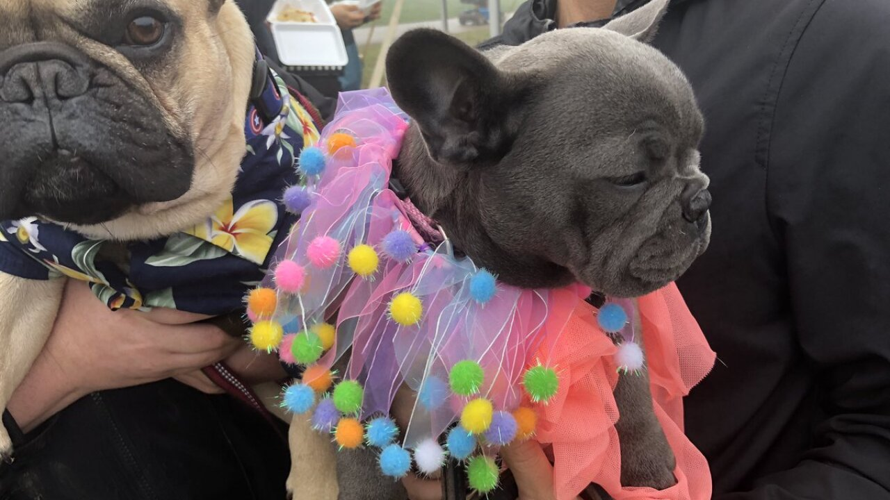 """A costume contest was held at the 3rd annual """"Racing of the Bulls"""""""