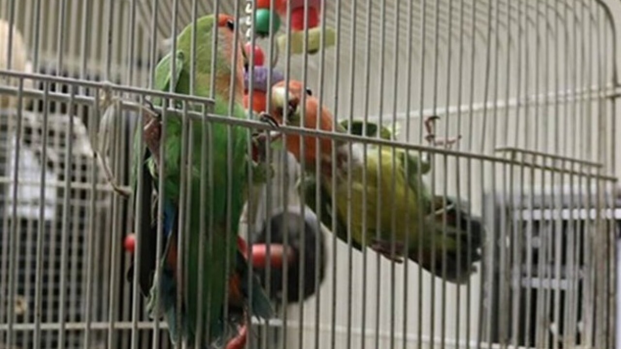 ASPCA says more than 600 birds removed from home