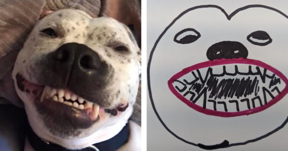 Pet portraits go viral for BARCS