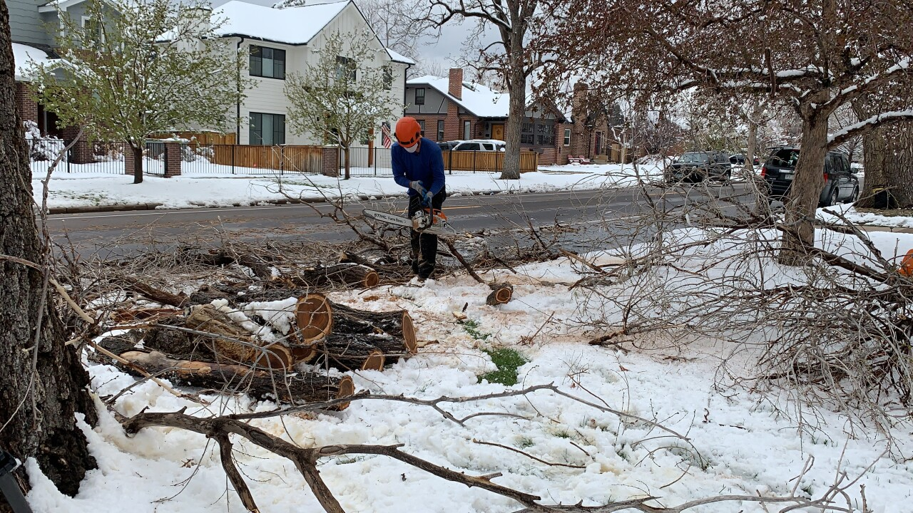 web arborist spring snowstrom.JPG