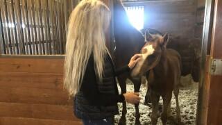 Melissa Moore horses.jpg