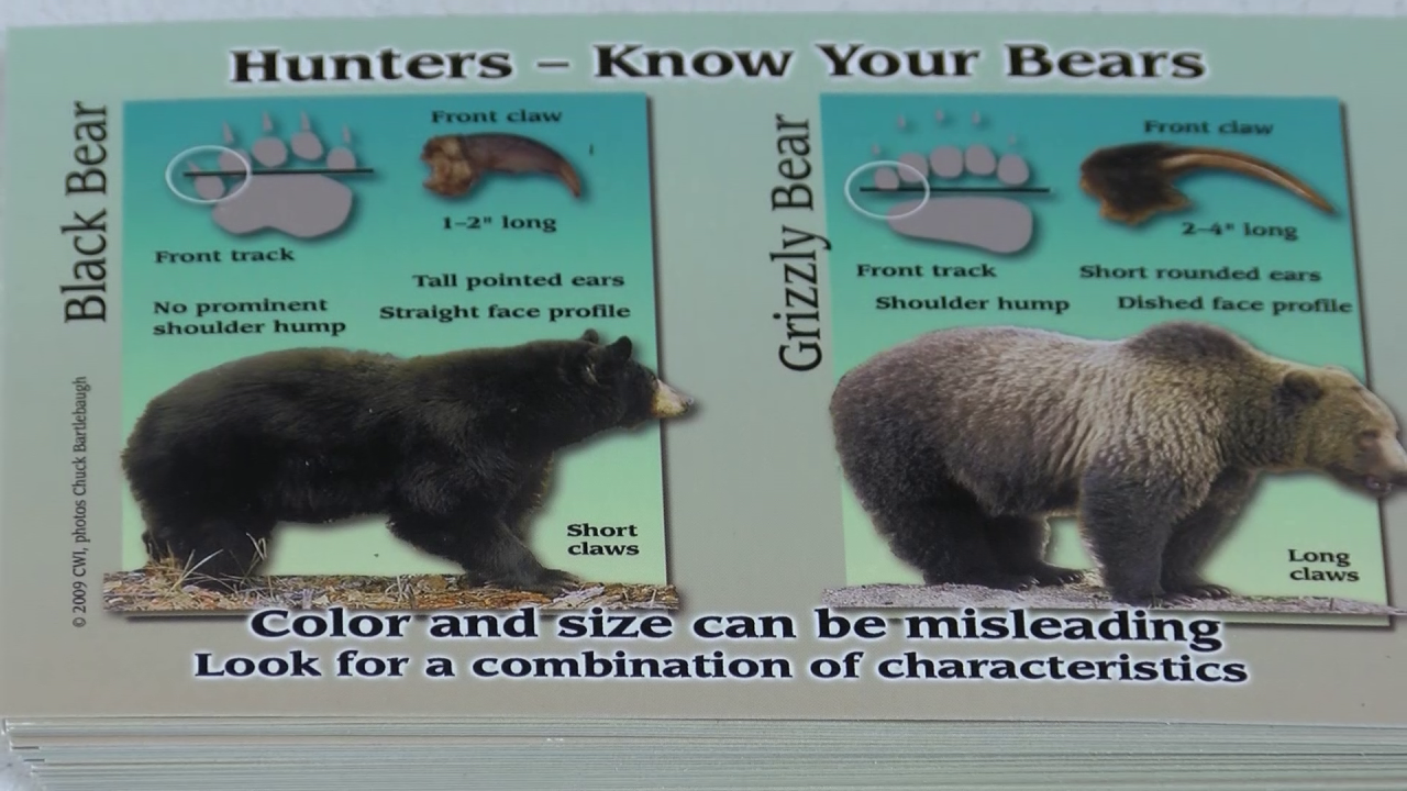 Know your bears: differences between black bear and grizzly bear