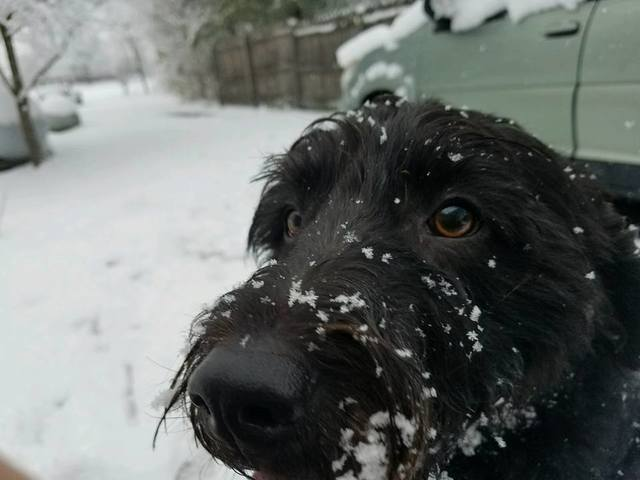 Paws for a day: Your pets enjoy Thursday's snow