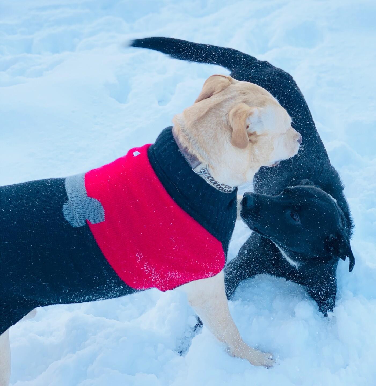 snow pups 10.jpg
