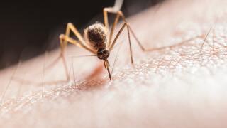 Mosquito (3).jpg