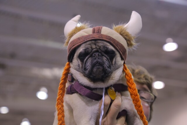 Cutest costumes from Milwaukee Pug Fest 2018 [PHOTOS]