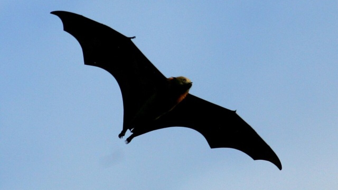 Grand Canyon visitors see uptick in bat activity near river