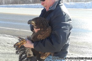 Injured Eagle