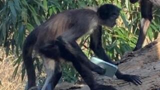 thumbnail_monkey_zoo_1.jpg