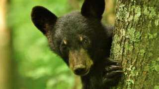 INTERACTIVE: Staying Safe Around Bears