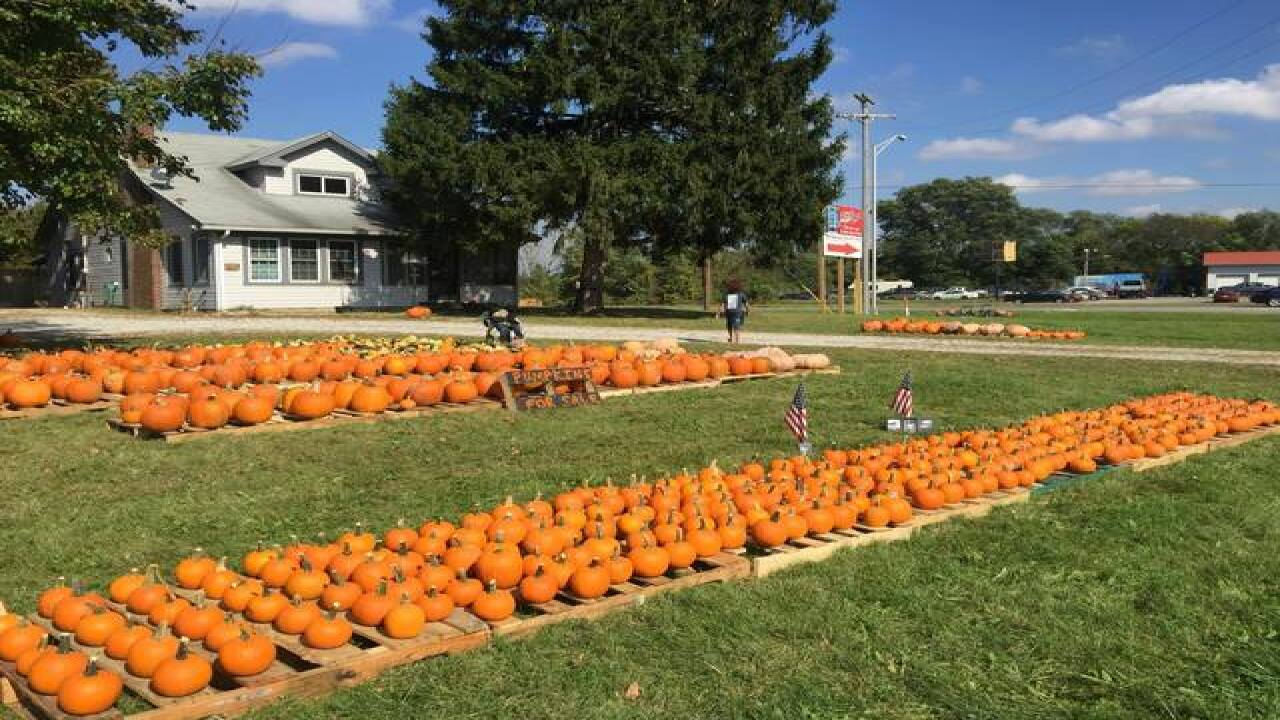 Photos: Pumpkins for freedom