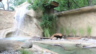 Otter habitat expanded at Detroit Zoo