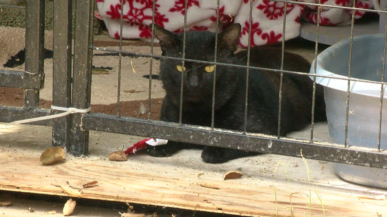 Feral cats used to combat county rodent problem