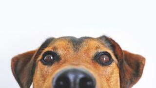dog generic.jpg