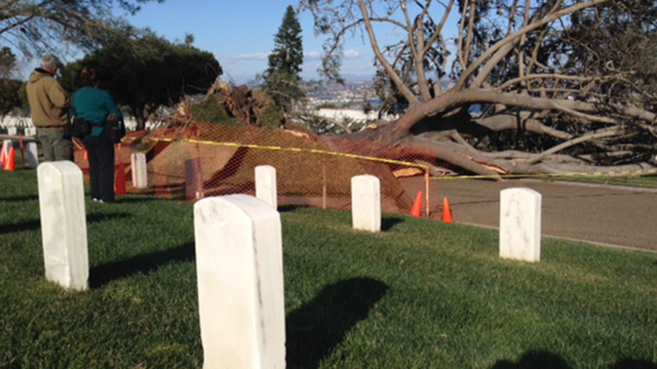Large tree falls at Ft. Rosecrans Cemetery