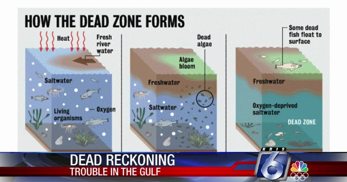 "How will Gulf's ""dead zone"" affect local fishing?"