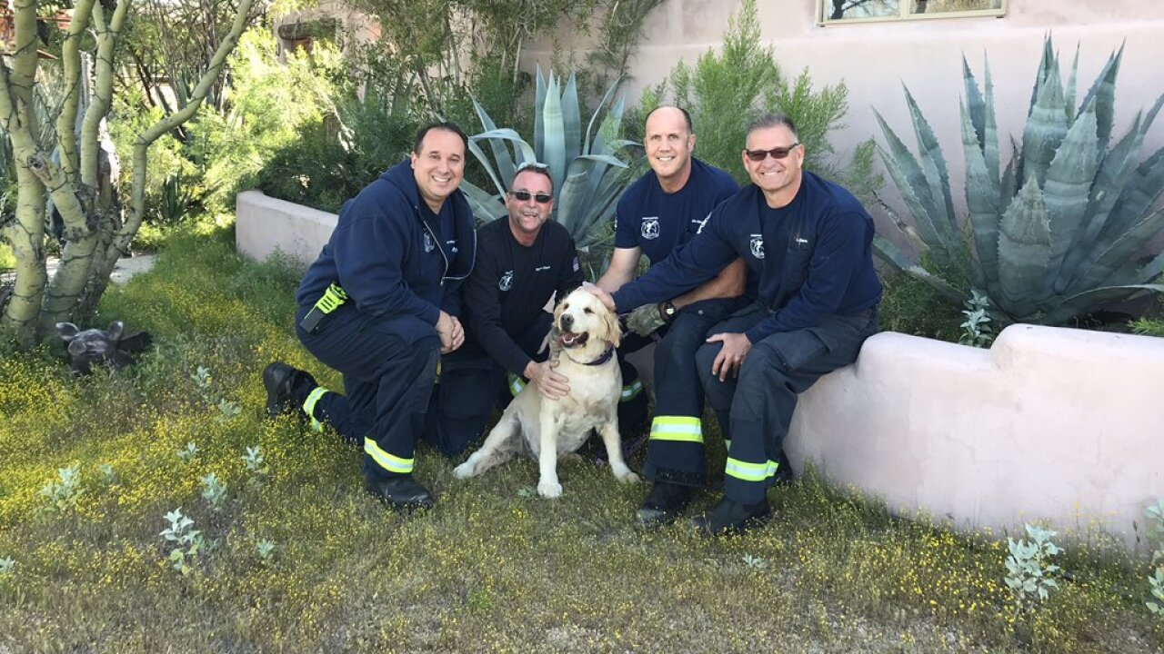 Scottsdale FD Golden Retriever
