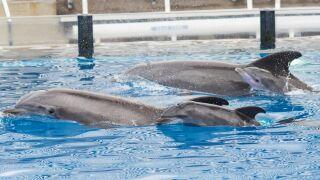 Dolphin babies_ SeaWorld.jpg