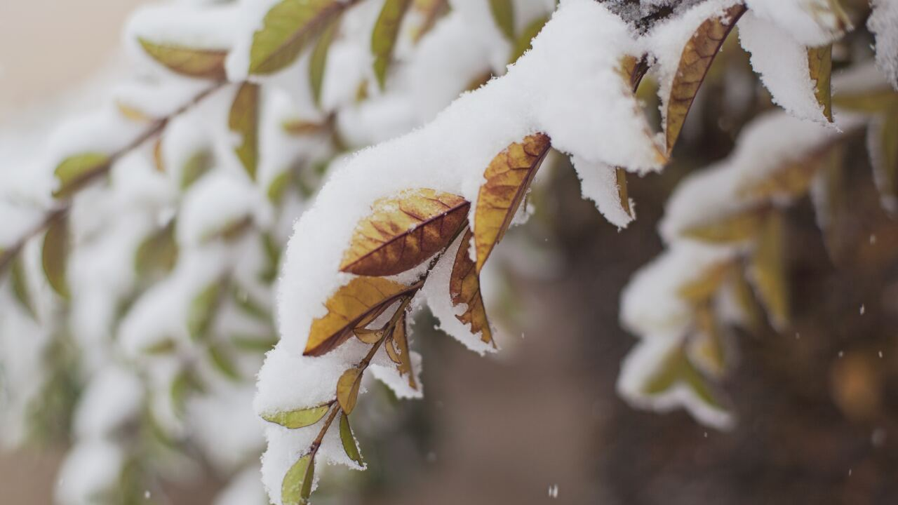 Snow on leaves generic