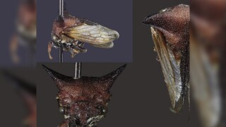 New insect species named after Lady Gaga because of its 'wacky fashion sense'