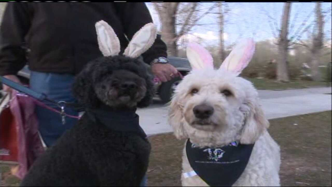 Flashlight egg hunt, Easter event for dogs