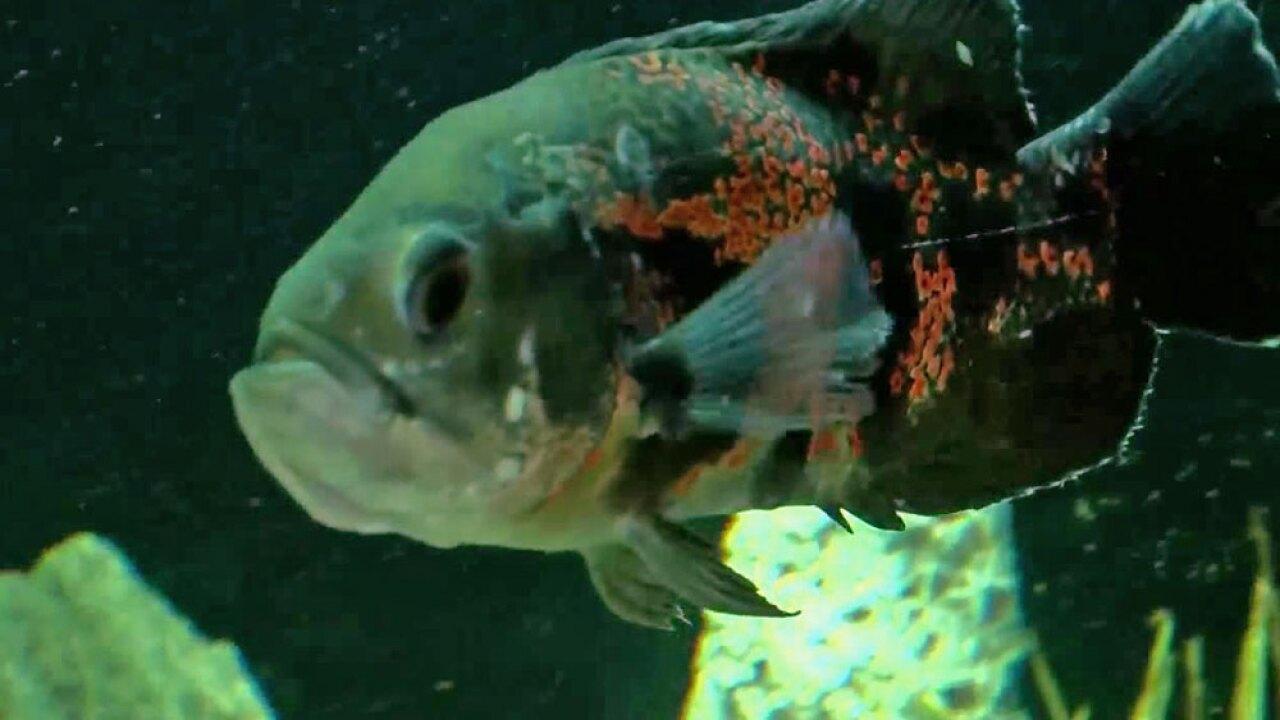 wptv-oscar-fish-.jpg