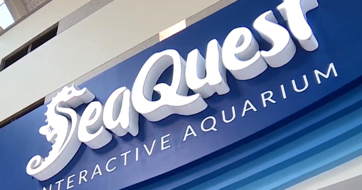 Animal Control cracks down on Las Vegas SeaQuest