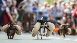 PHOTOS: See the wieners run