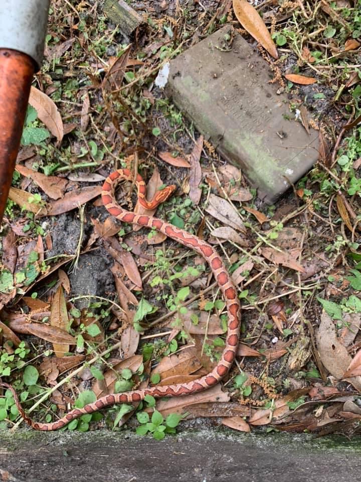 snake outside.jpg