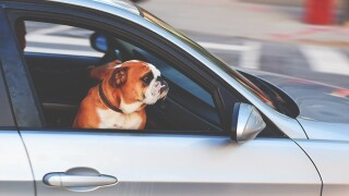 Driving You Crazy: Is it legal for people to drive with their pets on their laps?