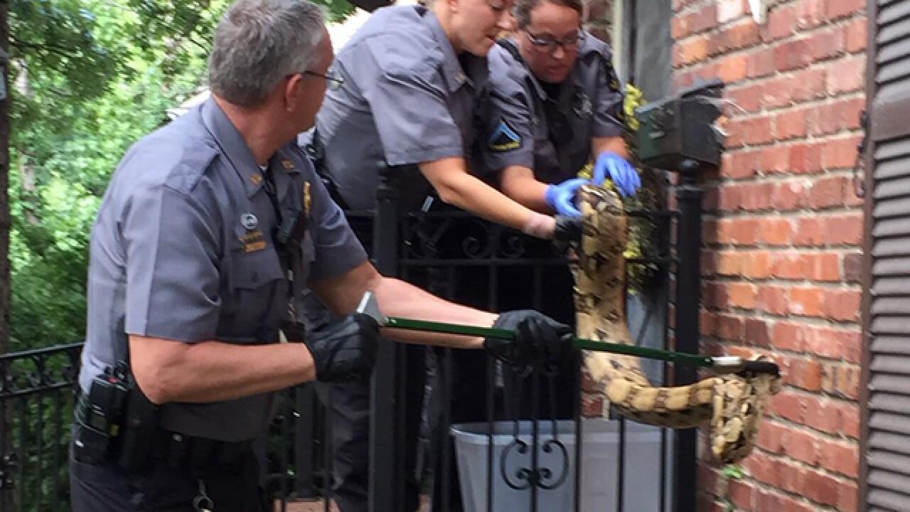 Kansas police wrangle massive boa constrictor