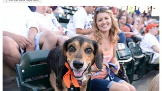 You can bring your dog to a Detroit Tigers game during 'Bark at the Park'