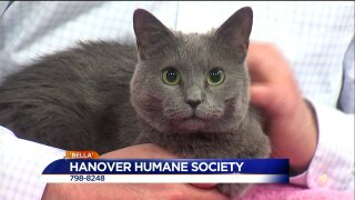Paws for Pets – Hanover Humane Society