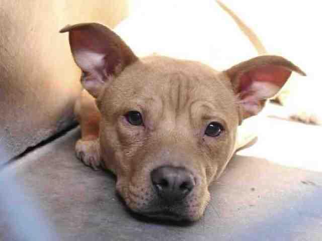 Adoptable pets from Arizona Humane Society and Maricopa County Animal Care (4/11)