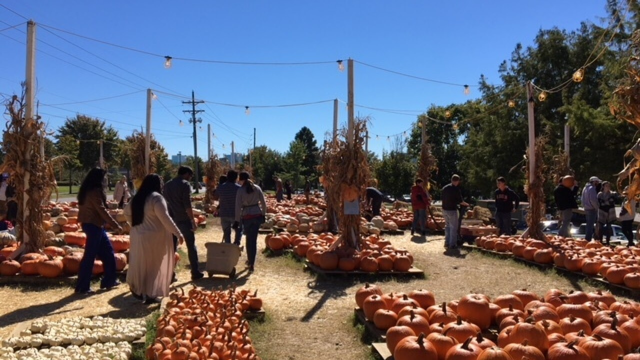 Local pumpkin patch proceeds to benefit pediatric cancer research