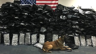 K-9 sniffs out 624 pounds of marijuana inside U-Haul in Florida